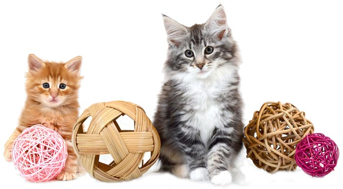 d6913abe5131 Αξεσουάρ για τη Γάτα (περιλαίμια