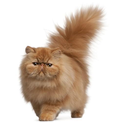 f525356b2333 Οδηγός φροντίδας για τη νέα γάτα ή γατάκι σας - Petshop.gr